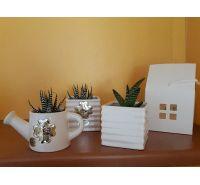 Annaffiatoio in ceramica con pianta grassa